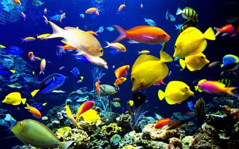 海洋世界主题系列